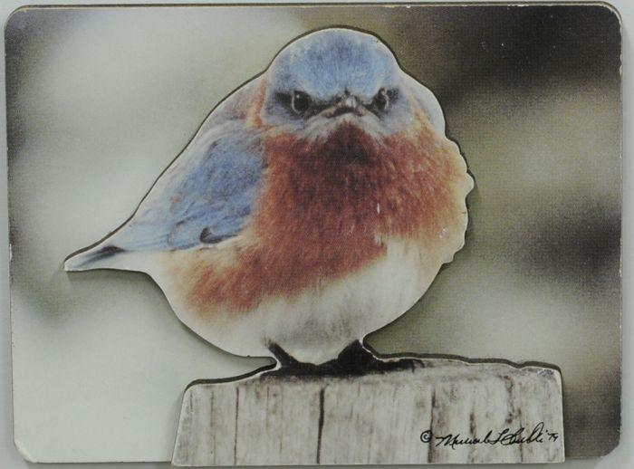 Mad Bluebird Magnet