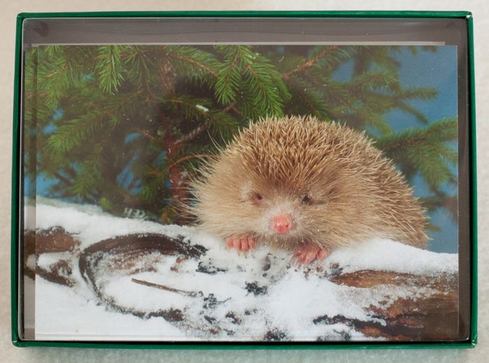 Hedgehog Holiday Boxed Notes