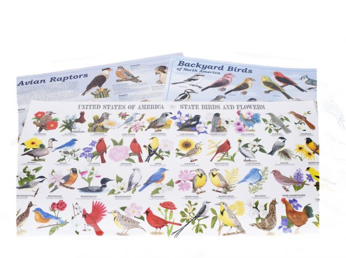 Birds Laminated Poster Set (Discounted Set of 3 Posters)