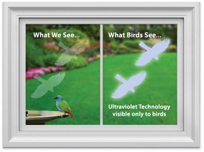 Hawk Bird-Saving Window Decal.