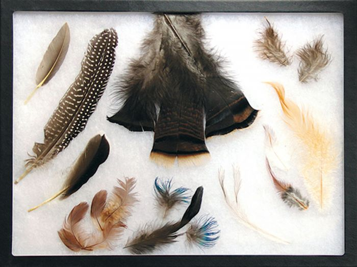 Comprehensive Feather Types Display.
