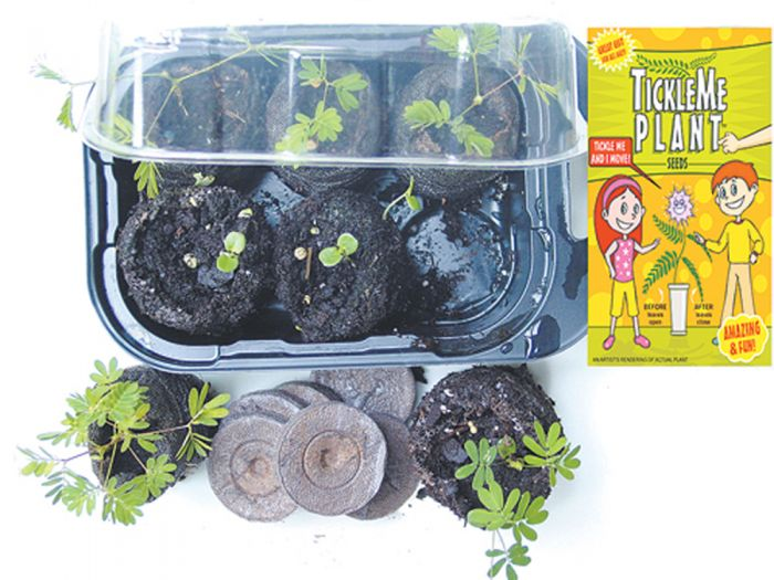 Tickle Me Plant Greenhouse Kit
