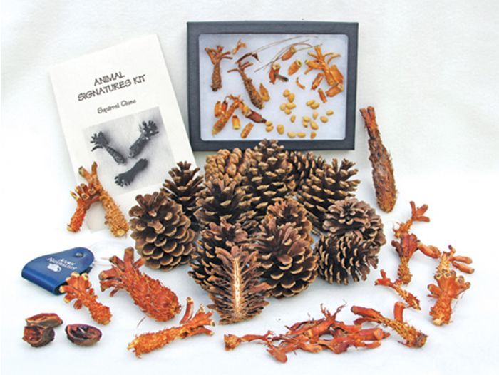Squirrel Clues (Animal Signatures® Kit).