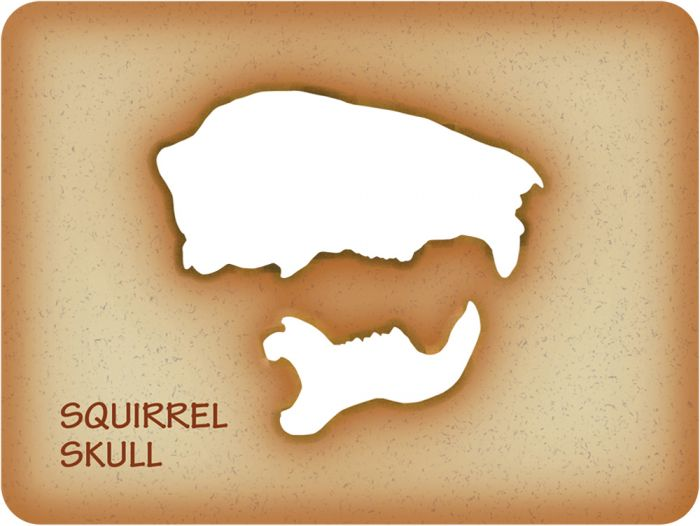 Squirrel Trace-A-Skull® Template