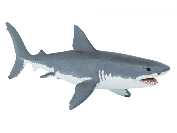 Shark (Great White) Model