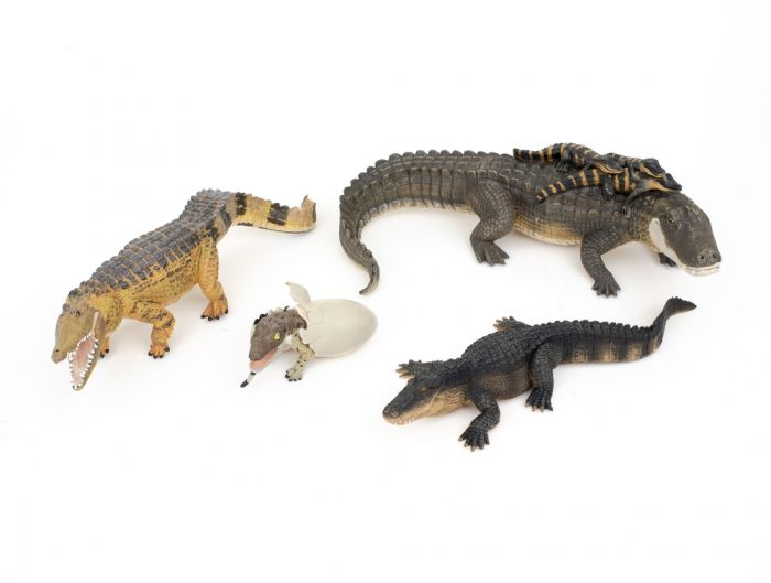 Crocodilians Model Collection (Discounted Set of 4 Models)