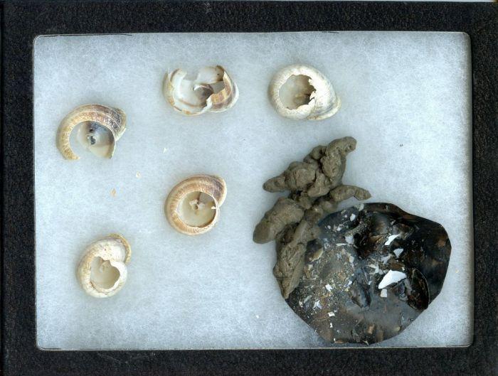 Land Snail Predation Signature Display (Animal Signatures® Display Series)