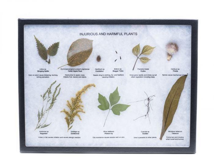 Injurious and Harmful Plants Display