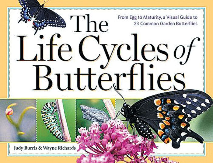 Life Cycles Of Butterflies (The)