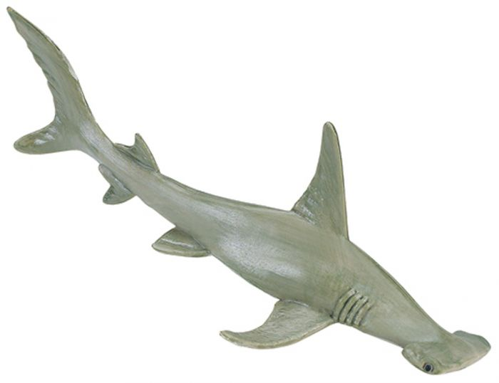 Shark (Hammerhead) Model