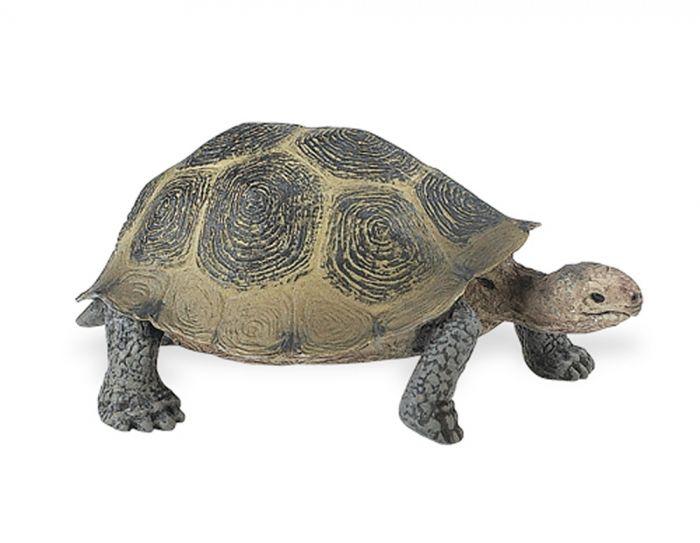 Tortoise (Desert) Model
