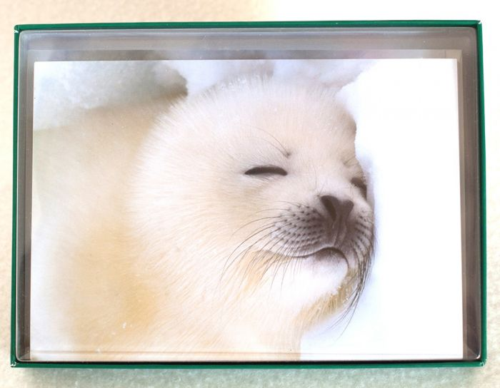 Harp Seal Pup Holiday Boxed Notes