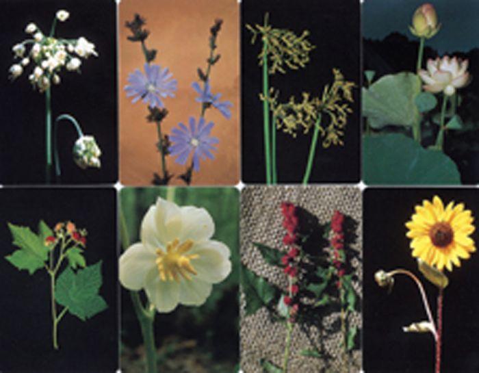 Plant Identification Card Deck (Eastern Edition)
