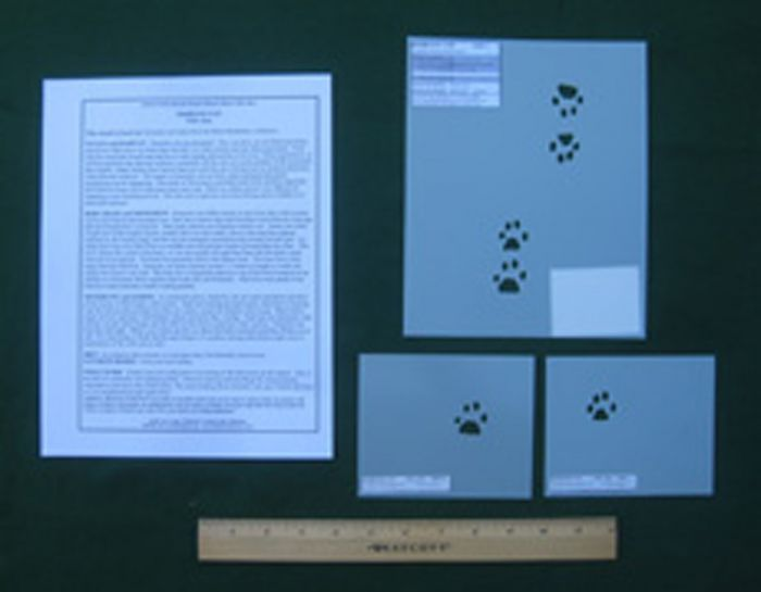 Domestic Cat Tracking Stencils