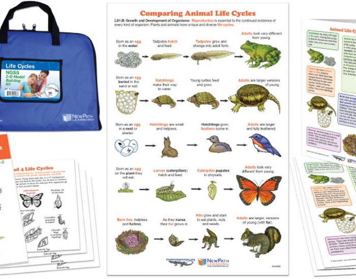 Life Cycles: NGSS 2-D Model Building Kit