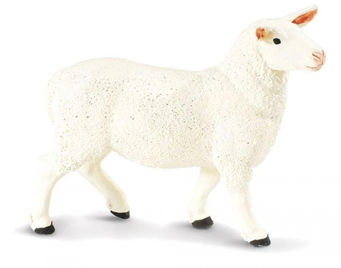 Sheep (Ewe) Model
