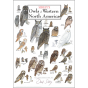 Sibley's Owls of Western North America Poster