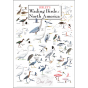 Sibley's Wading Birds of North America Poster