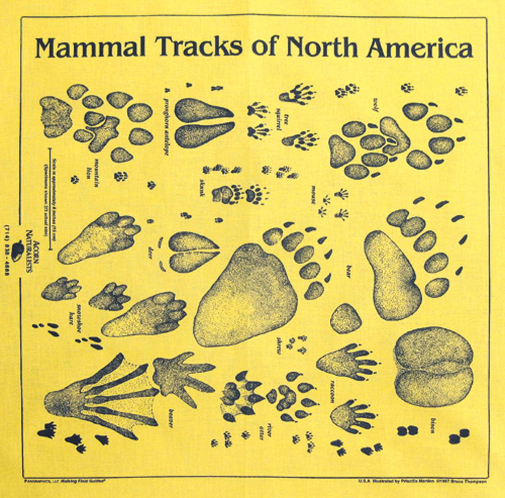 Yellow Track Scarf (Acorn Naturalists' Identification Bandana)