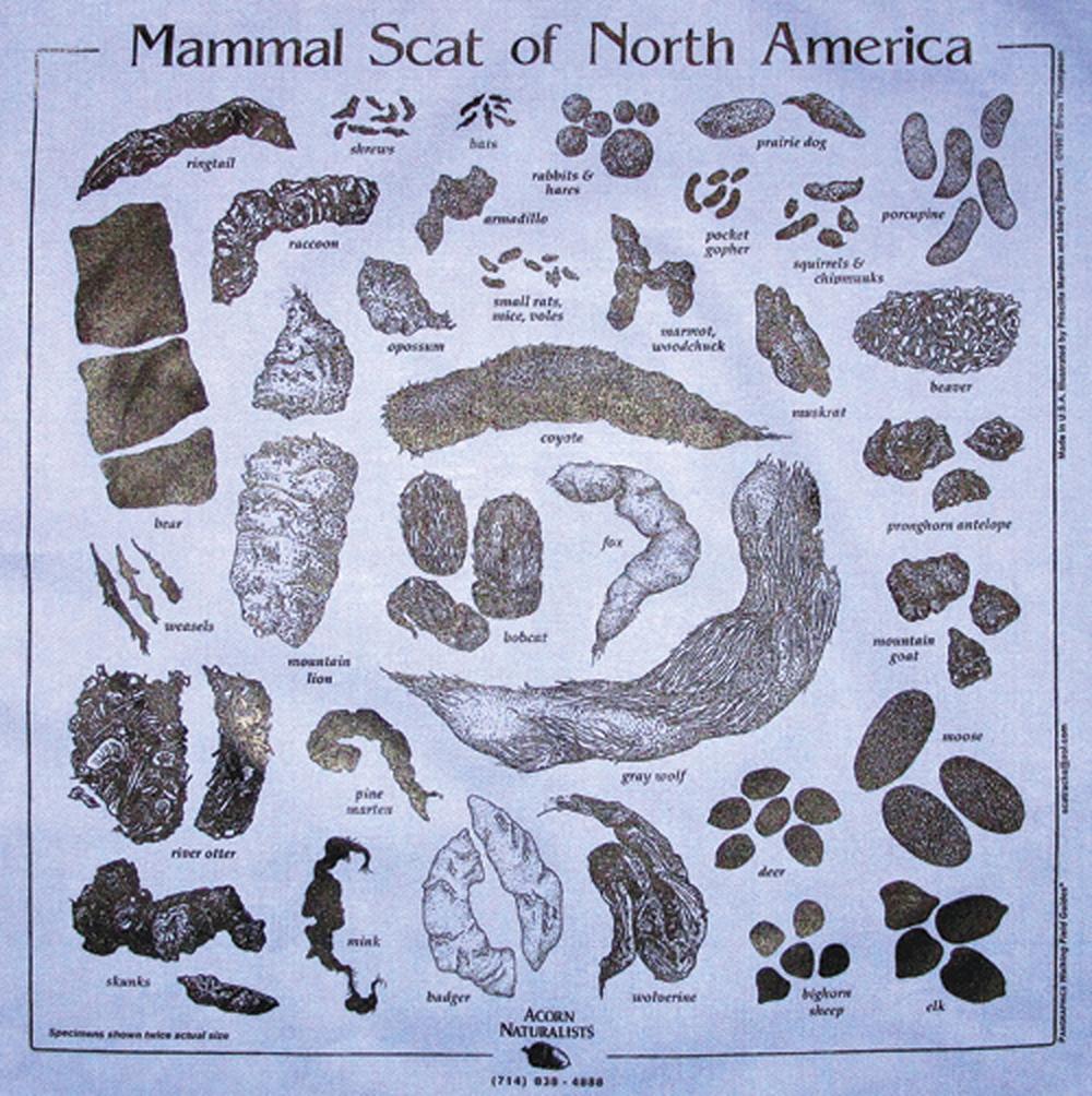 Chambray (Denim Blue) Scat Scarf (Acorn Naturalists' Identification Bandana)