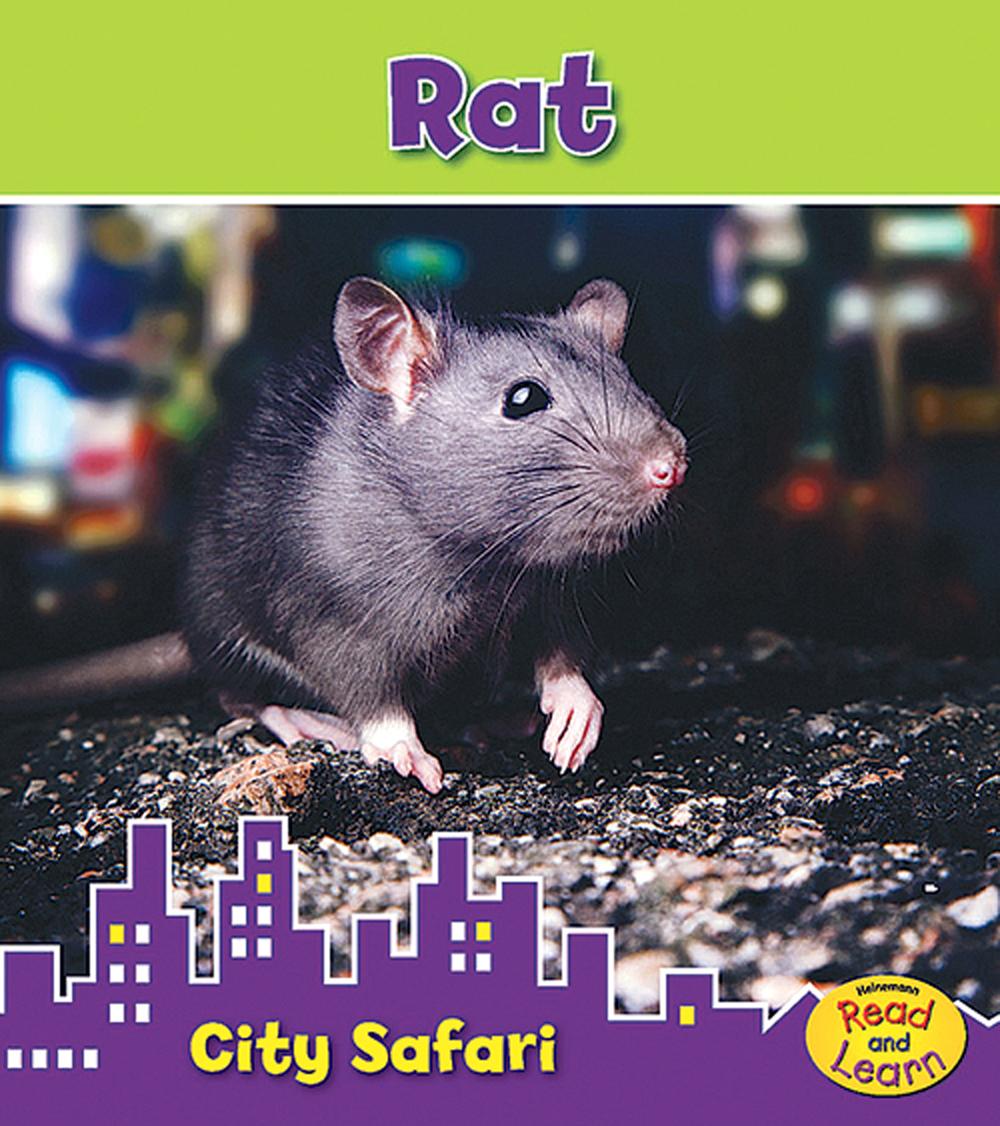 Rat (City Safari Series)
