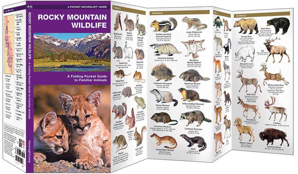 Rocky Mountain Wildlife (Pocket Naturalist® Guide)