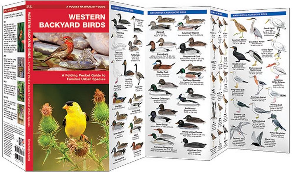 Western Backyard Birds (Pocket Naturalist® Guide)