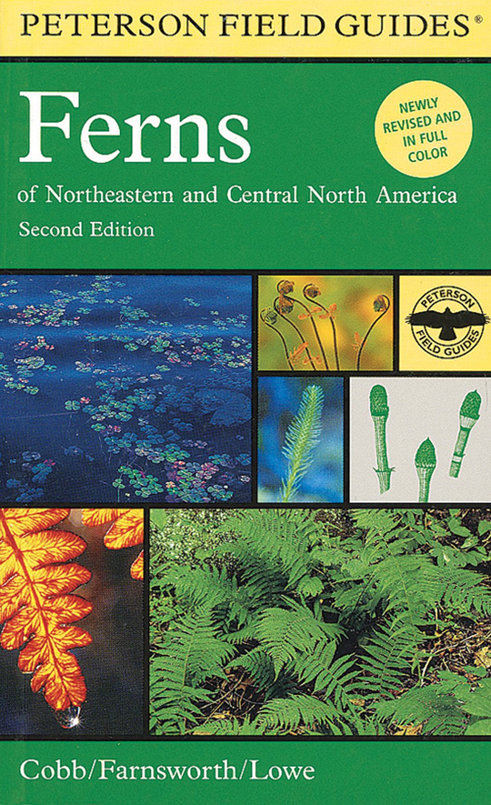 Ferns of Northeastern and Central North America (Peterson Field Guide®)