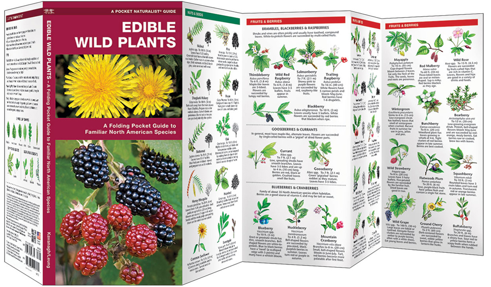 Edible Wild Plants (Pocket Naturalist® Guide)