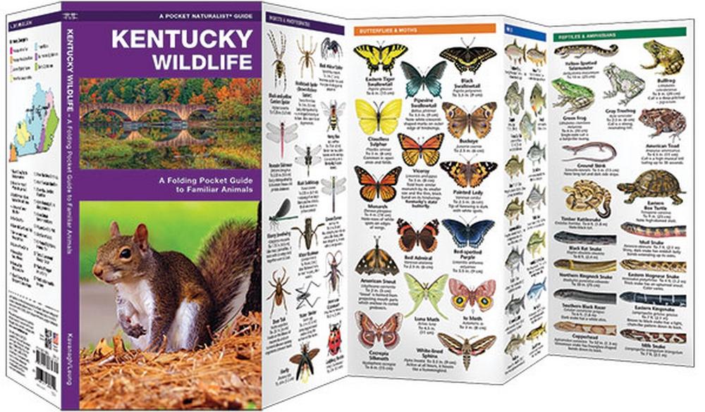 Kentucky Wildlife (Pocket Naturalist® Guide)