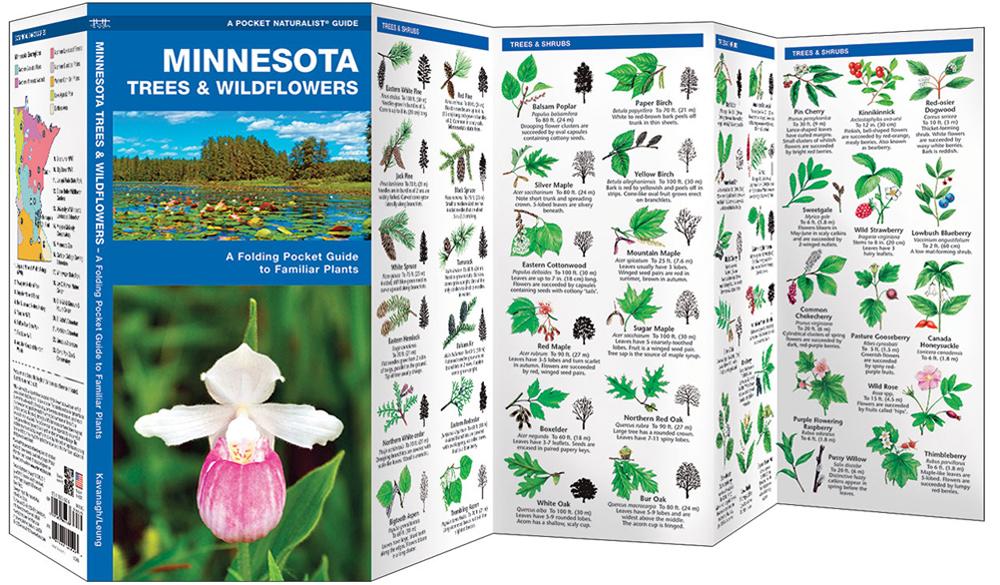 Minnesota Trees & Wildflowers (Pocket Naturalist® Guide)