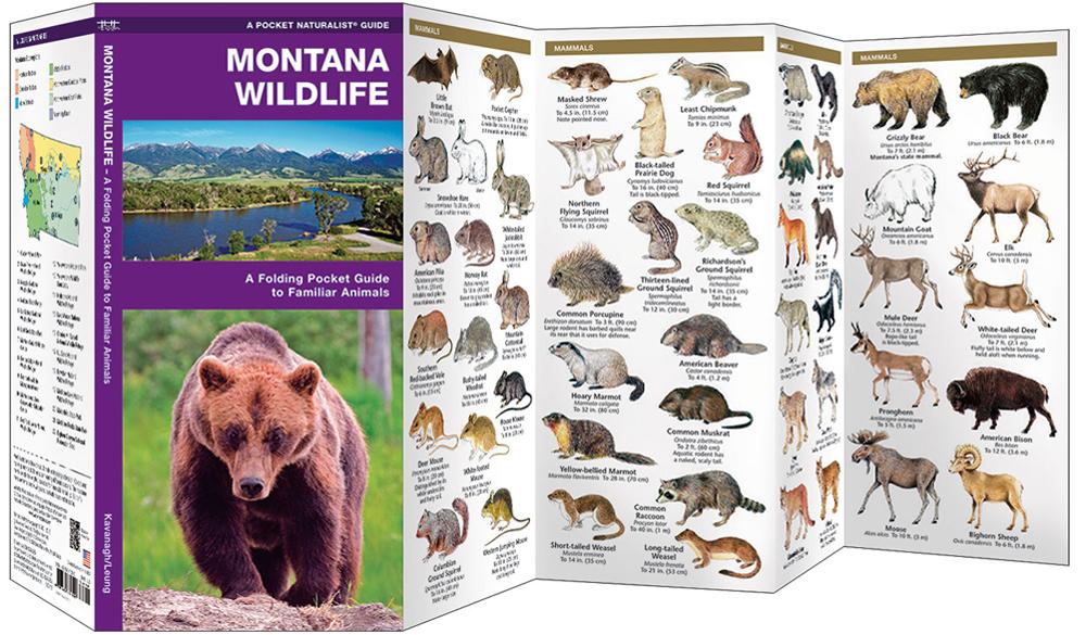 Montana Wildlife (Pocket Naturalist® Guide)