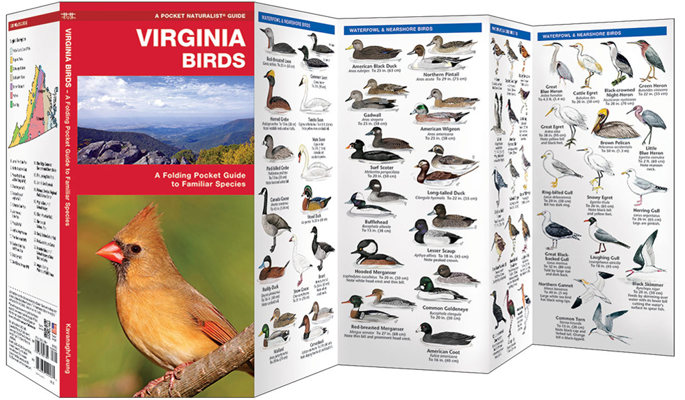 Virginia Birds (Pocket Naturalist® Guide)
