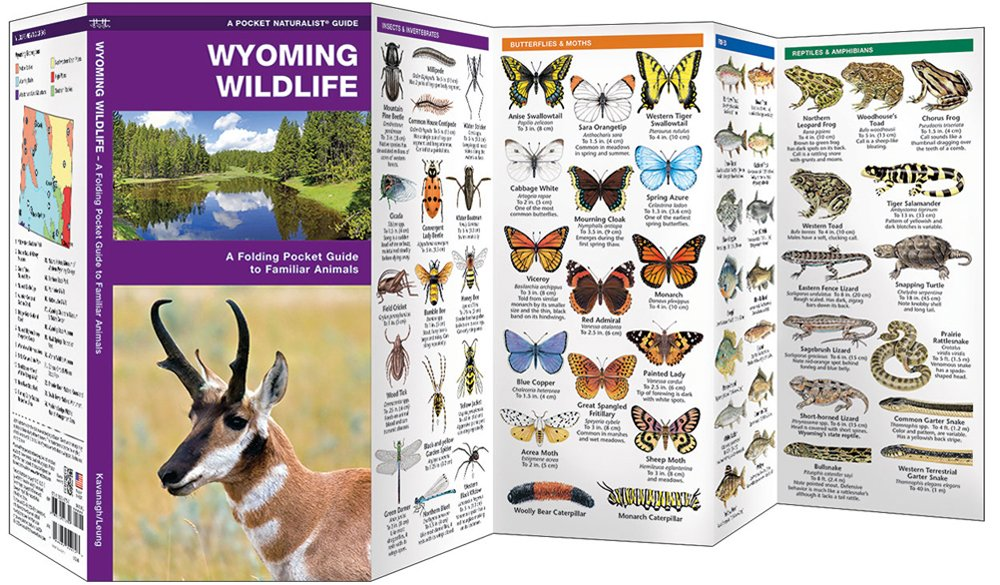 Wyoming Wildlife (Pocket Naturalist® Guide)
