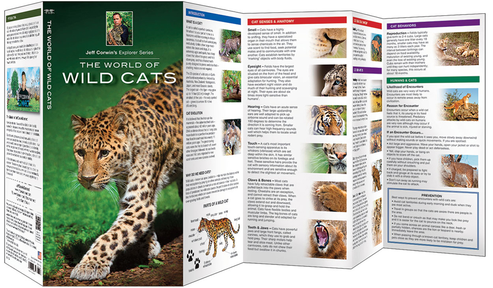World of Wild Cats, The (Jeff Corwin's Explorer Series®)