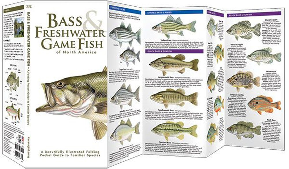 Bass & Freshwater Game Fish of North America (Pocket Fish Identification Guide®)