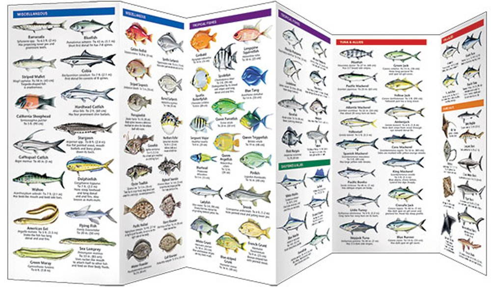 Saltwater Game Fish Of North America Pocket Fish Identification Guide,Stargazing Lily Flowers
