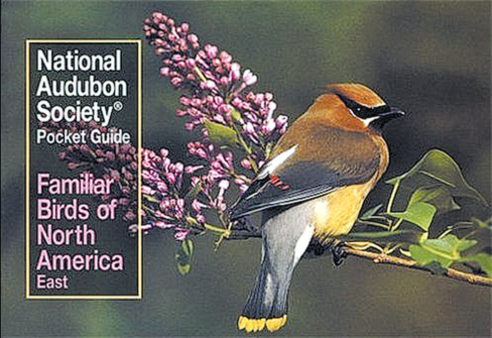 Image result for National Audubon Society Pocket Guide Familiar Birds of North America east