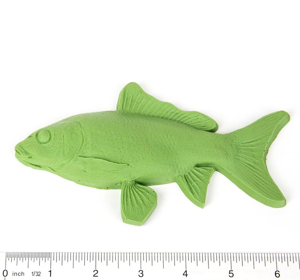 Carp Fish Printing Replica (Young)