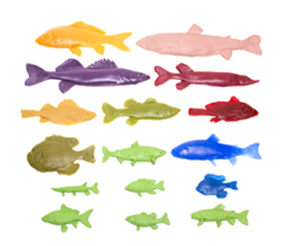 Freshwater Fish Printing Replica Collection (Discounted Set of 16 Fish Replicas)