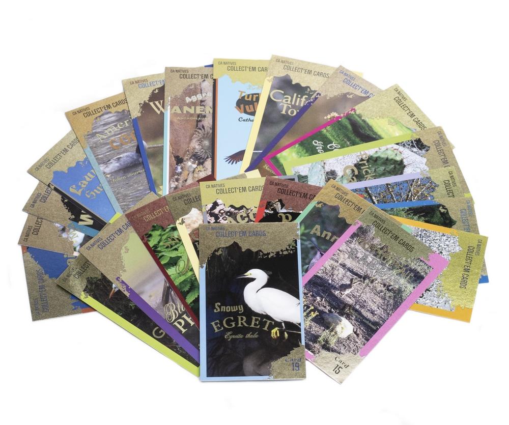 California Natives Trading Card Set (24 Random Cards in Acrylic Box)