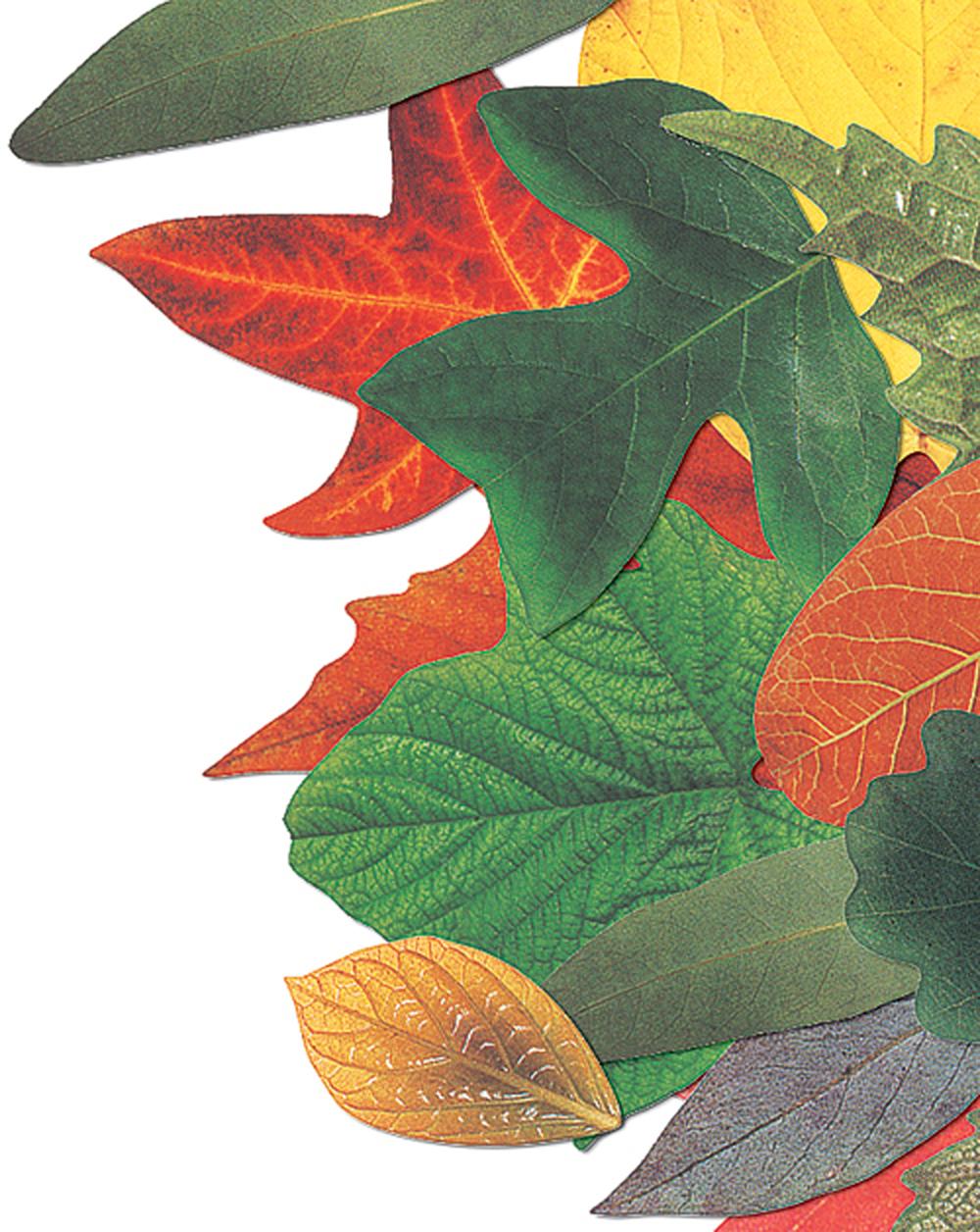 Dye-Cut Leaves, Seeds, & Acorns