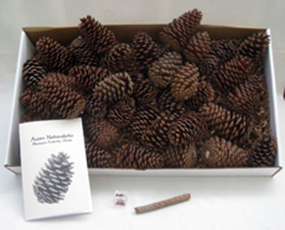 Math in Nature: Fibonacci Numbers Discovery Kit® (Class Kit)