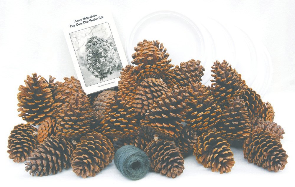 Pine Cone Bird Feeder Discovery Kit®