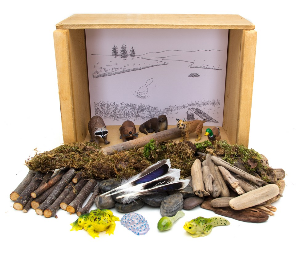 Pond & Stream Diorama (Create-A-Scene® Habitat Diorama Kit)
