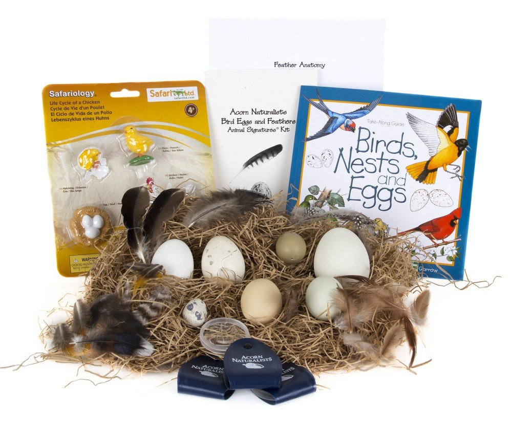 Bird Eggs and Feathers (Animal Signatures® Kit)