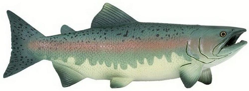 Salmon Model