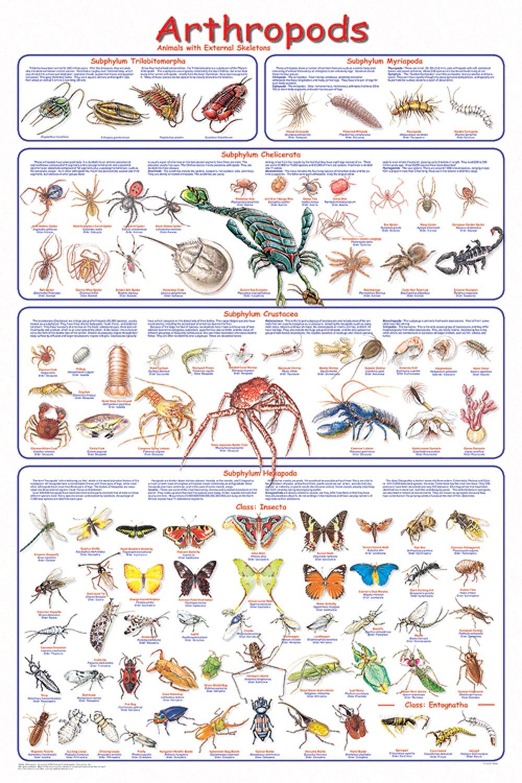 Arthropods (Laminated Poster)