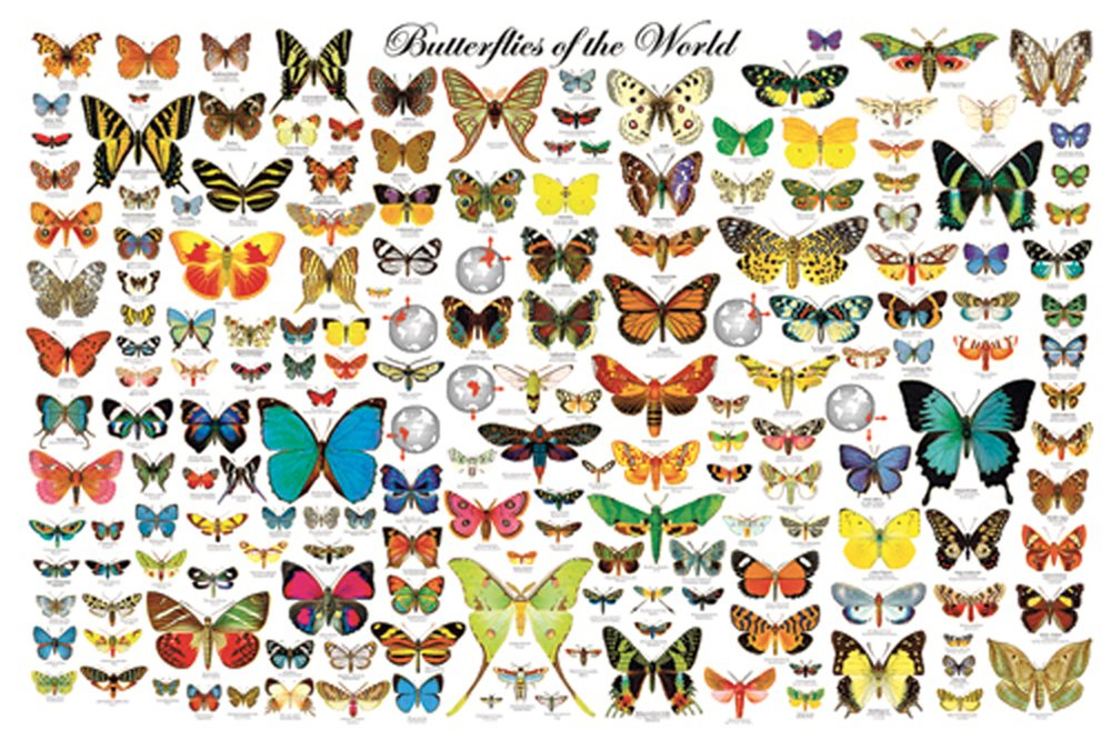 Butterflies of the World (Laminated Poster)