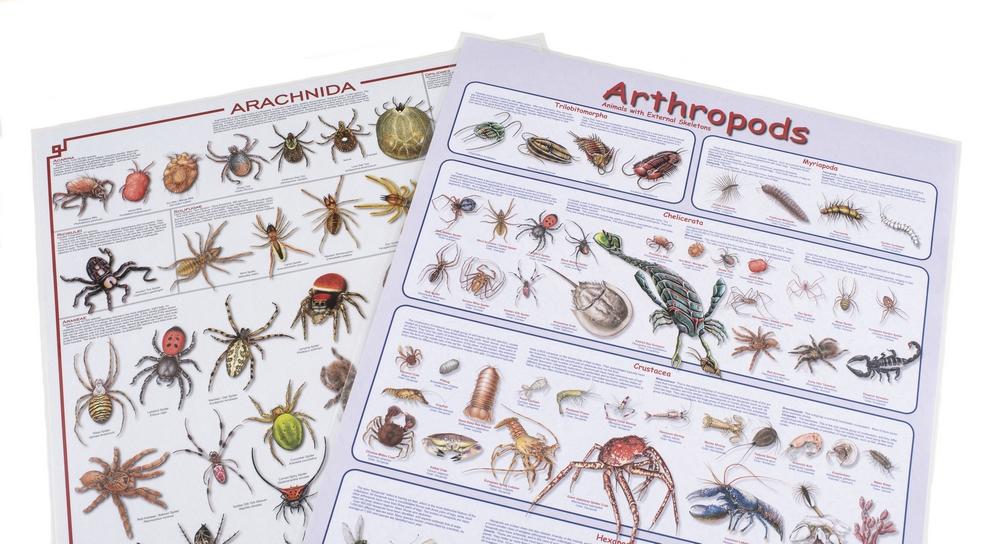 Arthropod & Arachnid Laminated Poster Set (Discounted Set of 2 Posters)